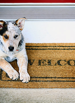 Dog on welcome mat